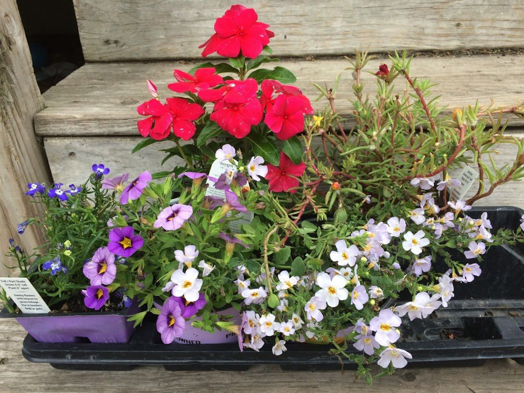 Pallet of flowers before planting