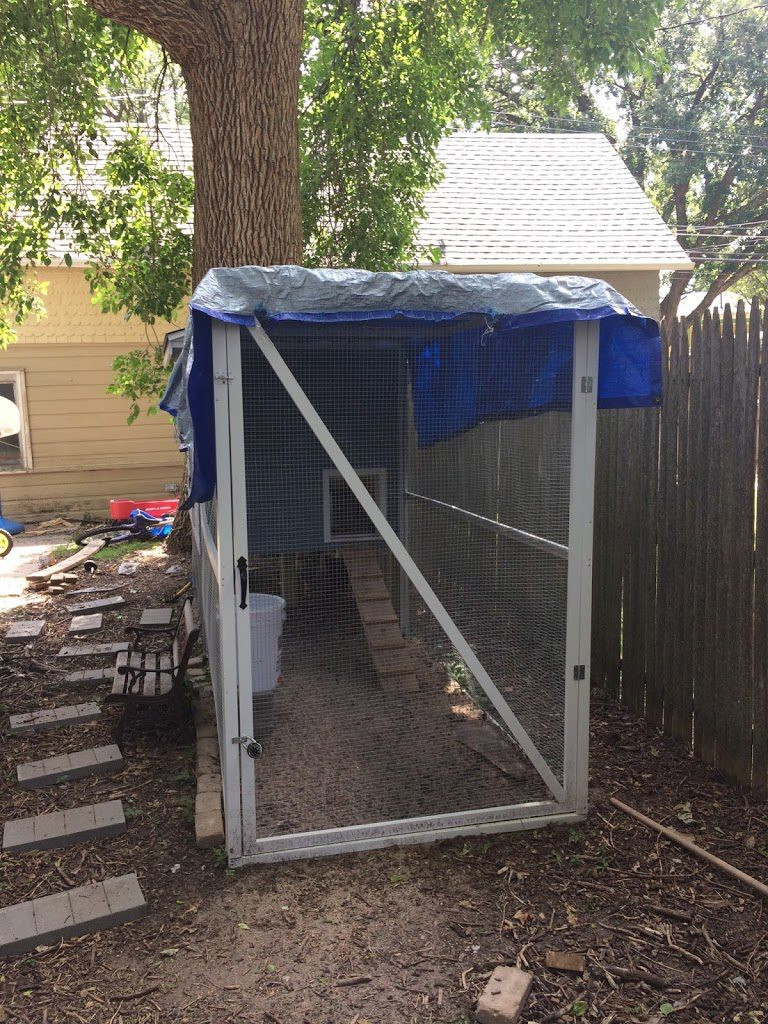 Tarp on chicken coop to keep cool