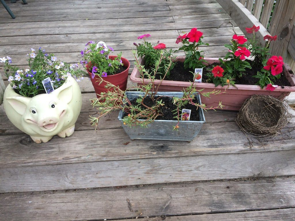 Flowers potted in various planters