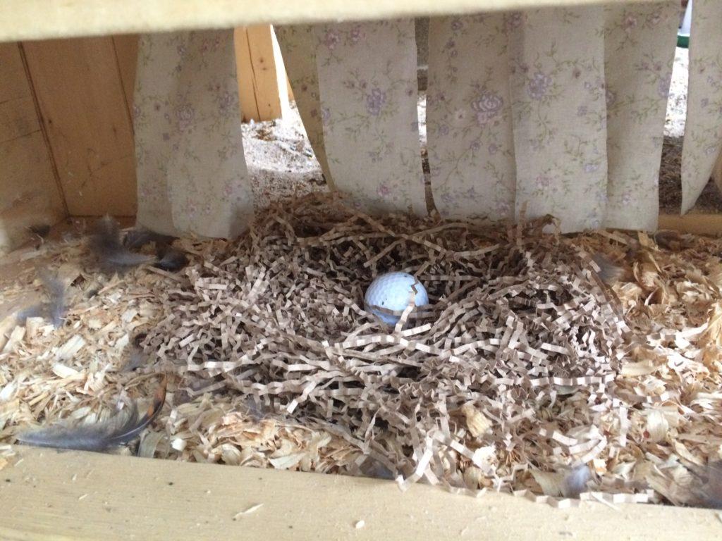 Pine shavings and shredded paper in nest box