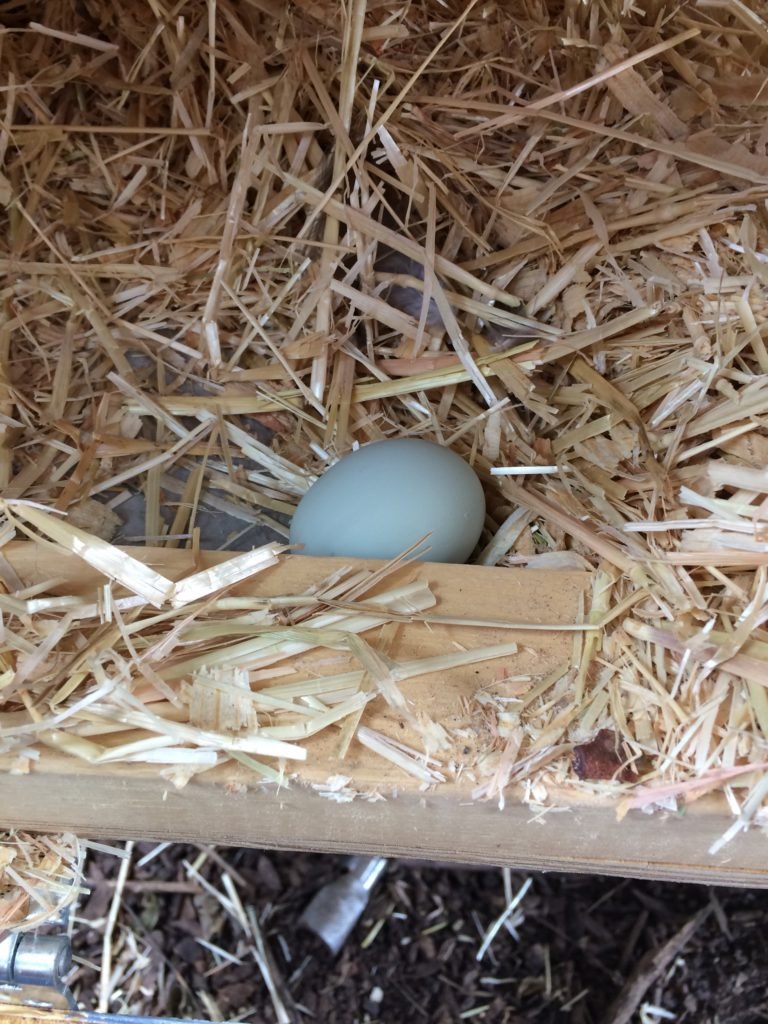Eggs should come out of the nest box clean