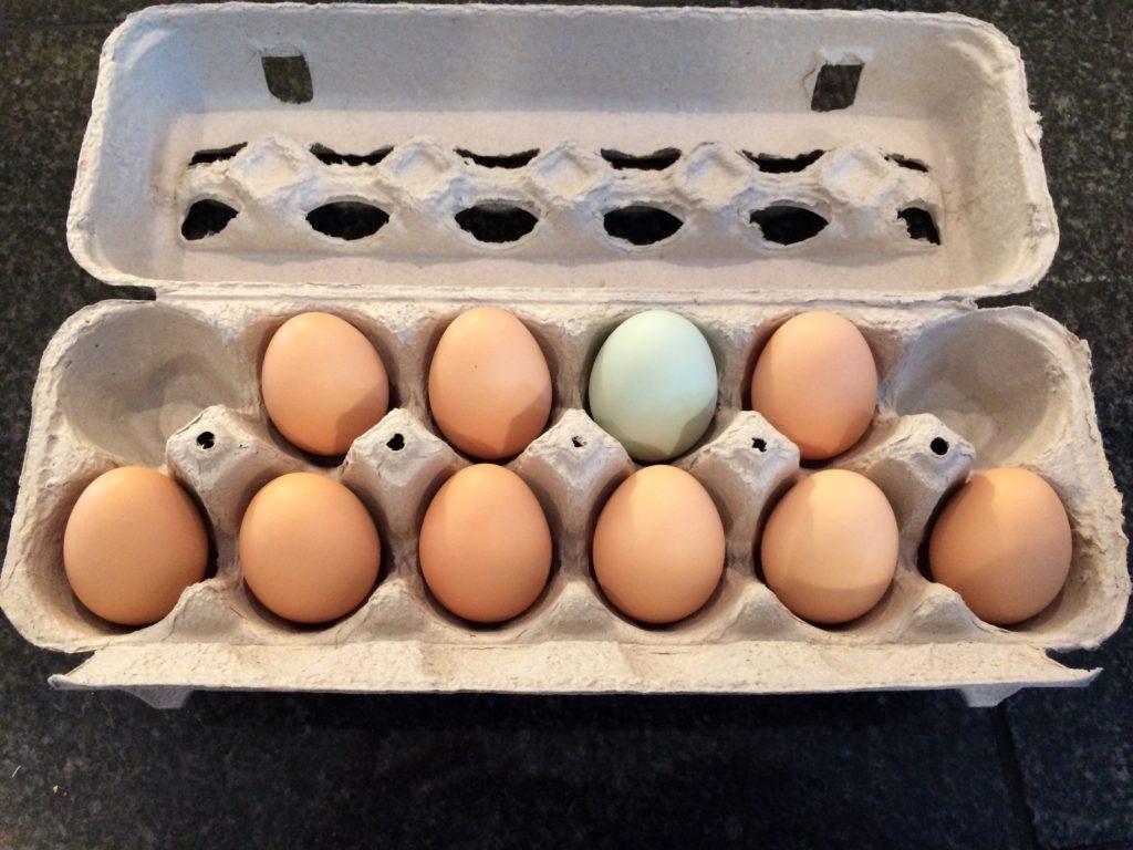 Wyandotte and Easter Egger eggs