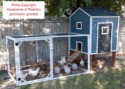 Blue chicken coop from The Housewives of Riverton