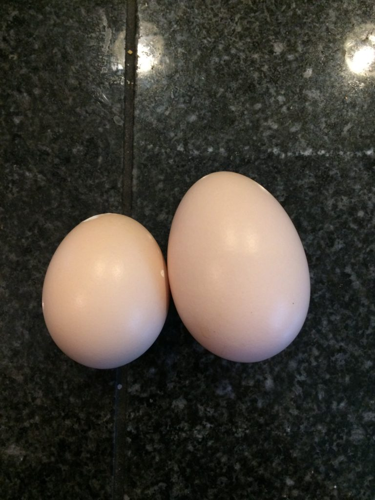 Double yolk egg vs normal size