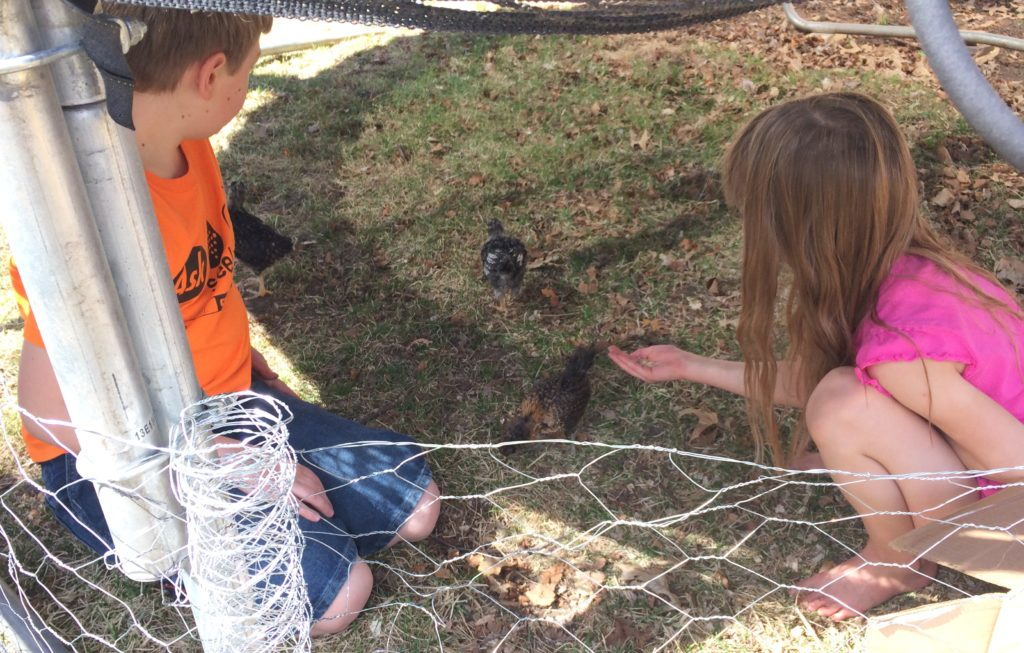 Kids can learn responsibility and compassion by taking care of animals